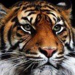 Tigre - Taller Biodanza y Cuatro Animales